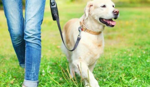 愛犬との散歩で一緒に健康散歩!